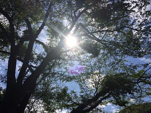 サングラス(目の日焼け対策)